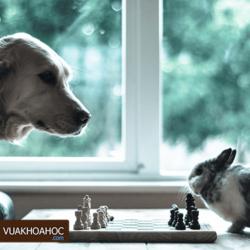 4 mẹo chơi cờ vua nhanh thắng