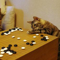 Những bí quyết chơi cờ vây đúng nghĩa