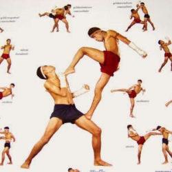 """Kỹ thuật chiến đấu của Muay Thai là """"kỹ thuật bát chi"""""""