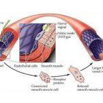 Oxit nitric dinh dưỡng cho hoạt động tình dục