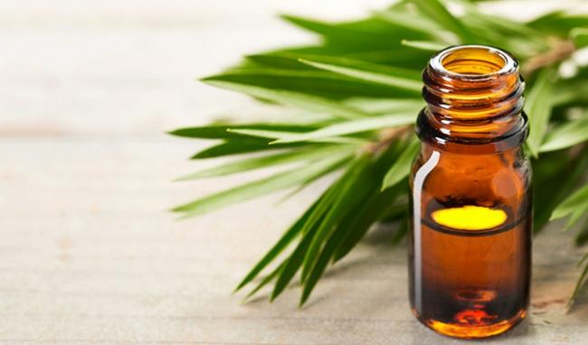 3 cách chữa nám da bằng lá lốt hiệu quả tại nhà