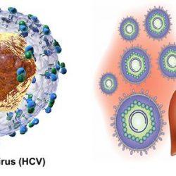 Làm thế nào để ngừa lây nhiễm viêm gan C?
