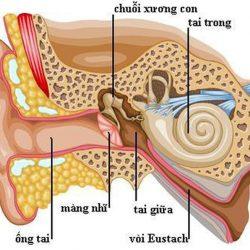 Nguyên nhân và triệu chứng viêm tai giữa