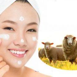 Nhau thai cừu có tác dụng gì và những bạn điều cần biết